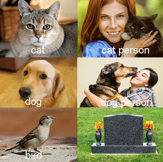 Funny 6 panel meme about cat and cat person, do and dog person and bird and dead person