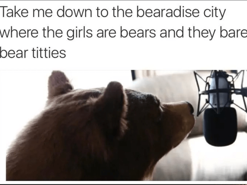 funny memes - Text - Take me down to the bearadise city where the girls are bears and they bare bear titties