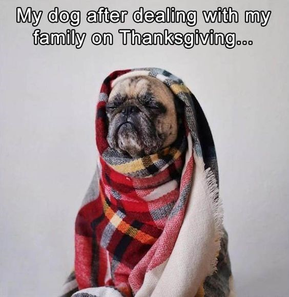 Pug - My dog after dealing with my family on Thanksgiving.. o00