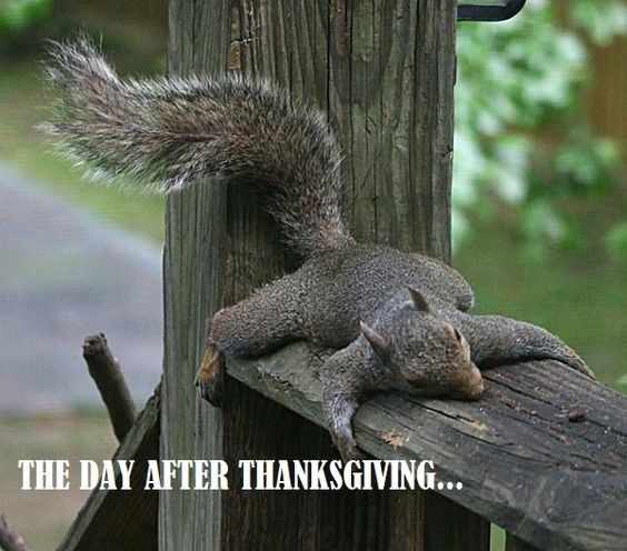 Squirrel - THE DAY AFTER THANKSGIVING...