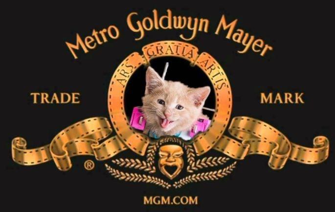Cat - Metro olduyn Mayer RALA MARK TRADE MGM.COM ARTIS ARS