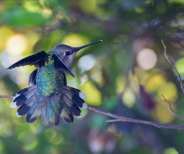 pretty humming birds - Bird