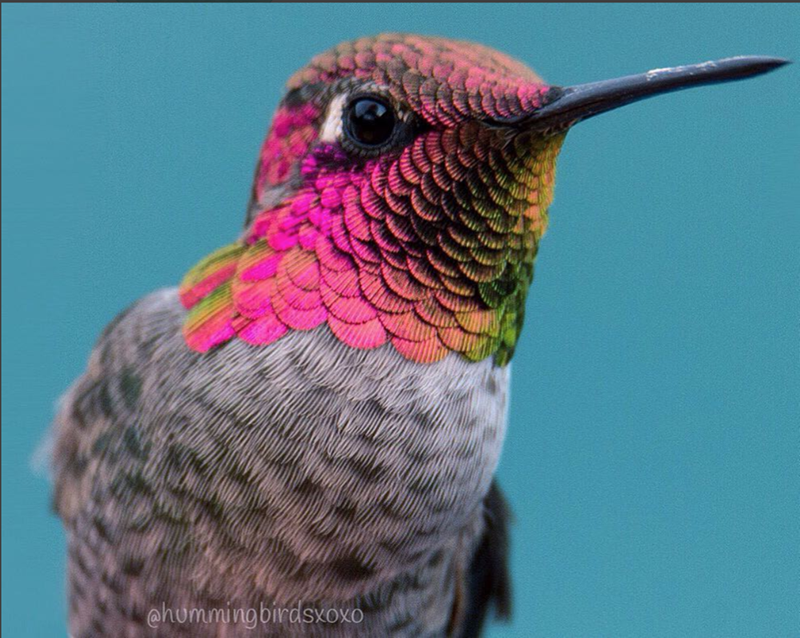 pretty humming birds - Bird - @hummingbirdsxoxo
