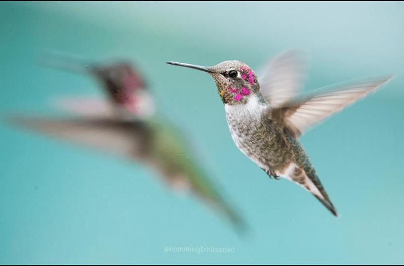 pretty humming birds - Bird - ehummingbirdsxoxo