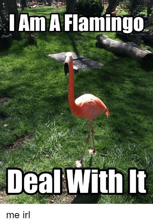Bird - IAm A Flamingo Deal With It me irl