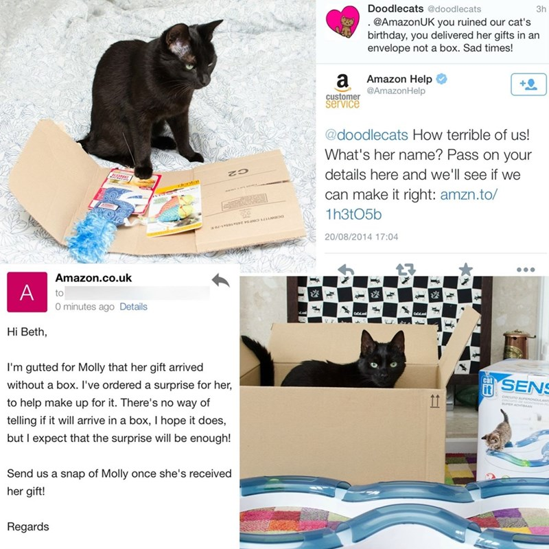 Amazon customer service that sent an extra box to help a cat enjoy her gift process