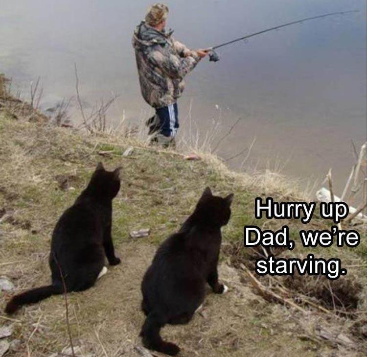 a funny meme
