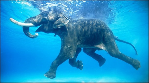 Elephants and Mammoths