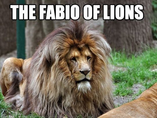 funny lions - - Lion - THE FABIO OF LIONS