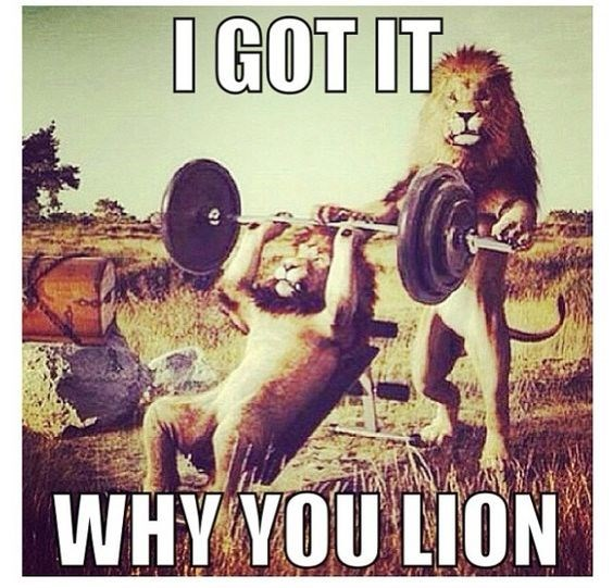 funny lions - - Poster - IGOT IT WHY YOU LION