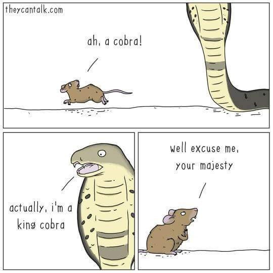 Organism - theycantalk.com ah, a cobra! well excuse me your majesty actually, i'm a king cobra