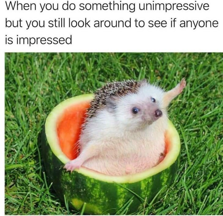 Hedgehog - When you do something unimpressive but you still look around to see if anyone is impressed