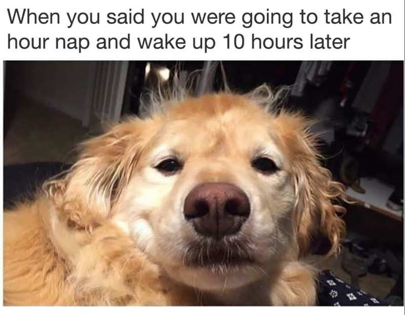 Funny meme about taking naps.