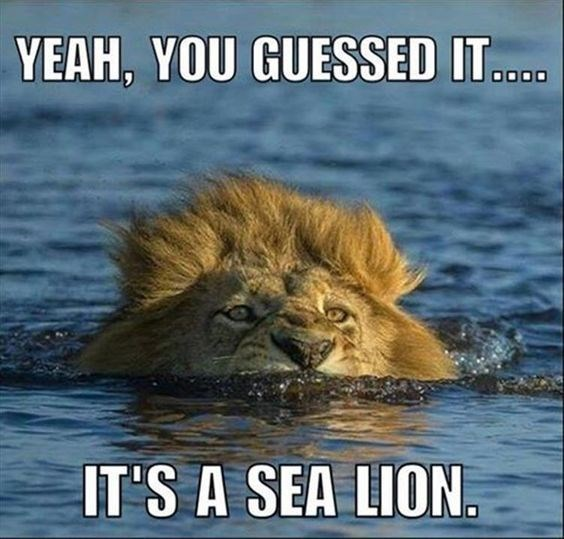 funny lions - - Wildlife - YEAH, YOU GUESSED IT...D IT'S A SEA LION