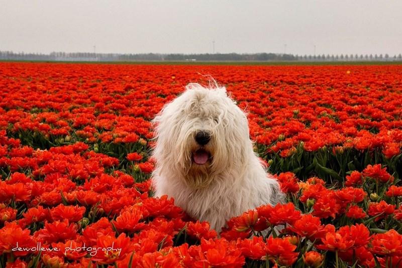 Dog - Jawellene photogra