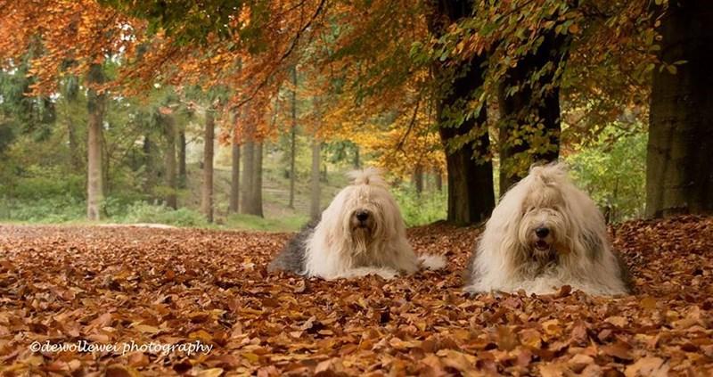 Dog - Octewollewei photography