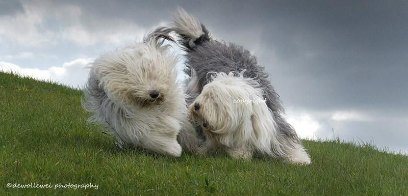 Dog - copyrigh dewollewei photography