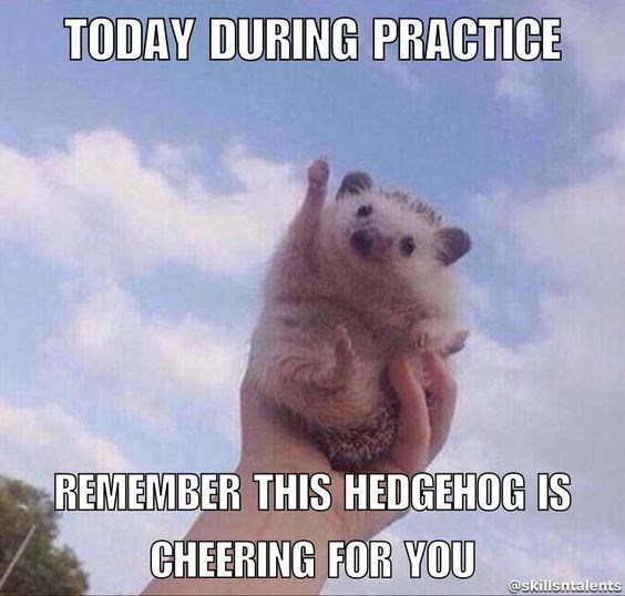 Photo caption - TODAY DURING PRACTICE REMEMBER THIS HEDGEHOG IS CHEERING FOR YOU @skillsntalents