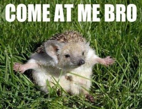 Hedgehog - COME AT ME BRO