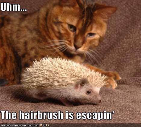 Vertebrate - Uhm... The hairbrush is escapin CRNHRSCHEEZE URGER.COM