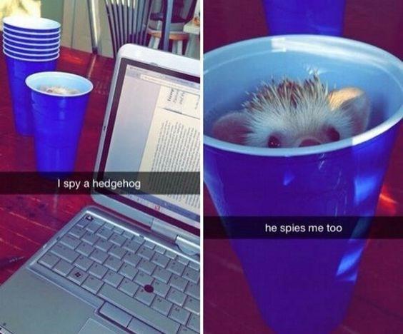 Product - I spy a hedgehog he spies me too