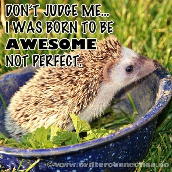 Erinaceidae - DONT JUDGE ME.. WAS BORN TO BE AWESOME NOT PERFECT www:crittercannection.cc