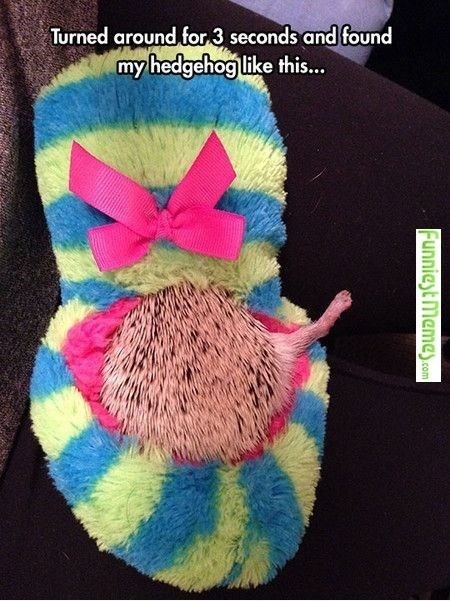Knitting - Turned around for 3 seconds and found my hedgehog like this... Funniest Memes.com