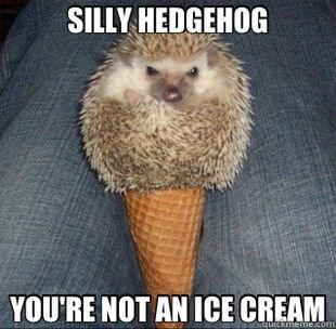 Hedgehog - SILLY HEDGEHOG YOU'RE NOT AN ICE CREAM quickmeme.com