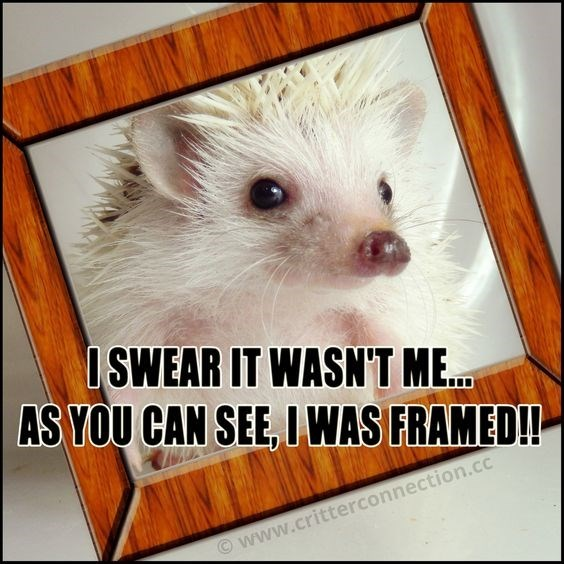 Mammal - ISWEAR IT WASN'T ME.. AS YOU CAN SEE, IWAS FRAMED! www.critterconnection.cc