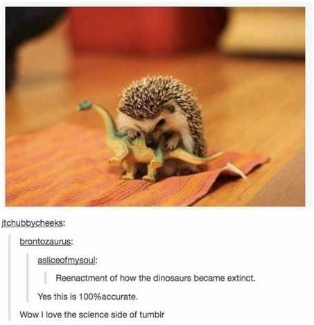 Hedgehog - itchubbycheeks: brontozaurus: asliceofmysoul: Reenactment of how the dinosaurs became extinct. Yes this is 100%accurate. WowI love the science side of tumblr