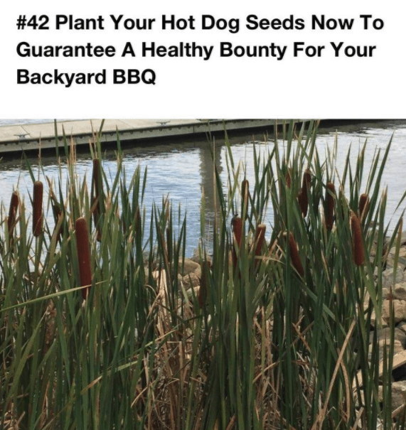 Vegetation - #42 Plant Your Hot Dog Seeds Now To Guarantee A Healthy Bounty For Your Backyard BBQ