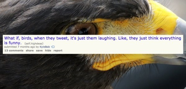 Hair - What if, birds, when they tweet, it's just them laughing. Like, they just think everything is funny. (self.highdeas) submitted 7 months ago by KyleBobO 13 comments share save hide report