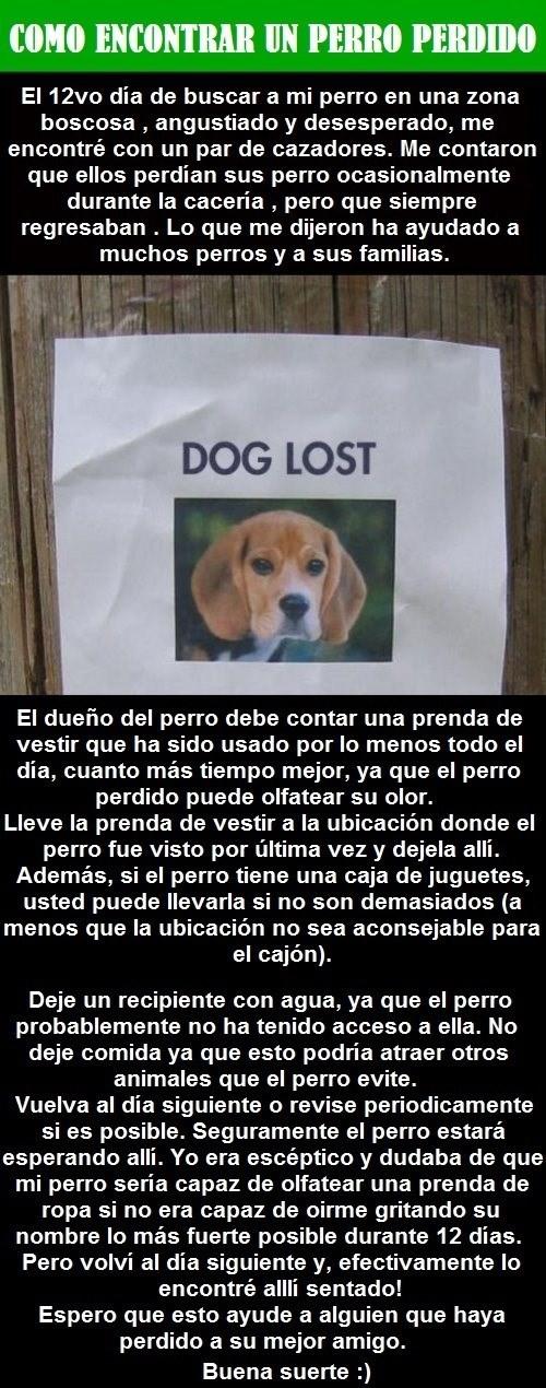 que hacer cuando has perdido a tu perro