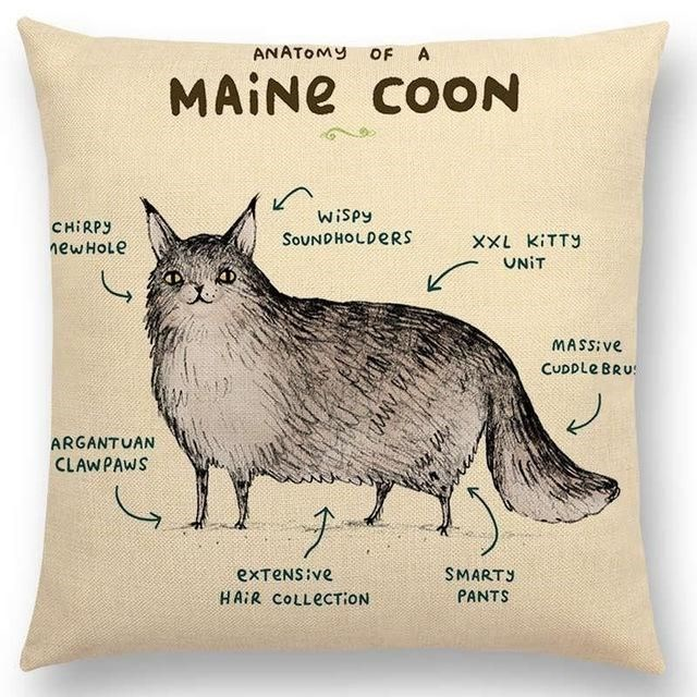 Cat - ANATOMY A OF MAINE COON Wispy CHIRPY SOUNDHOLDERS XXL KITTY ewHoLe UNIT MASS ve CUDDLE BRU ARGANTUAN CLAWPAWS SMARTY exTeNS ve PANTS HAIR COLLECTION