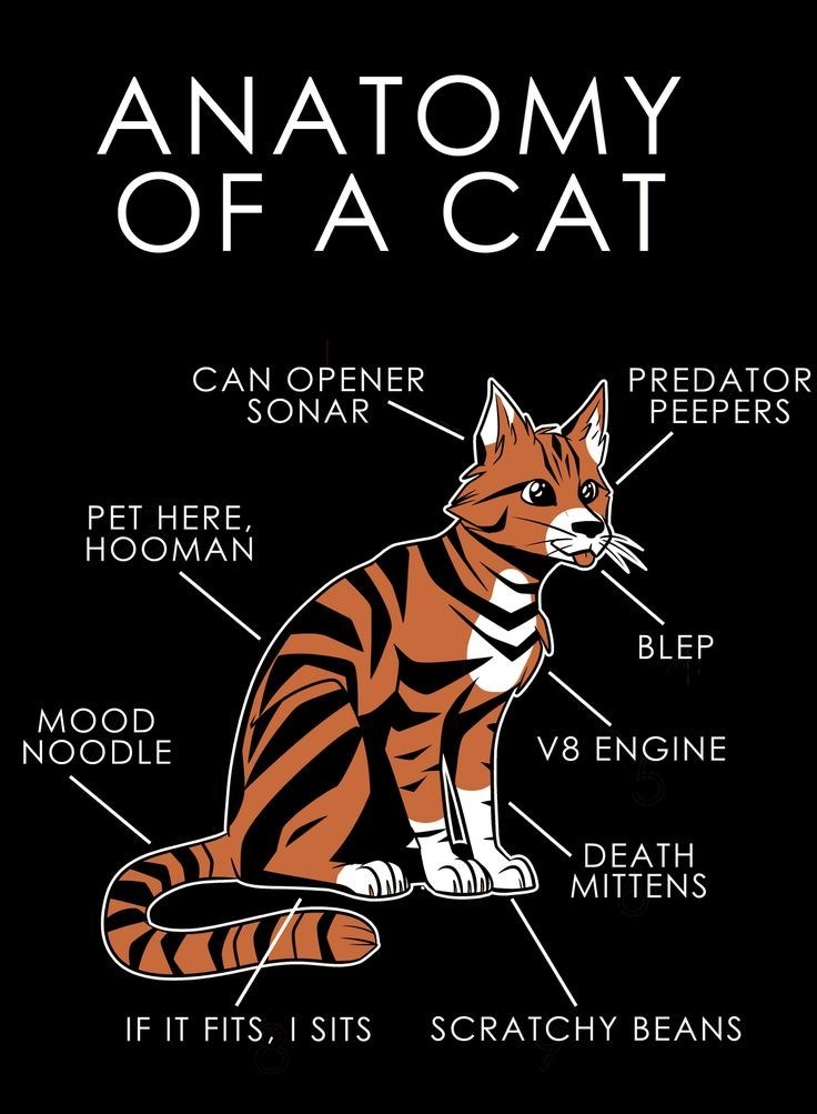 Felidae - ANATOMY OF A CAT PREDATOR PEEPERS CAN OPENER SONAR PET HERE, HOOMAN BLEP MOOD NOODLE V8 ENGINE DEATH MITTENS SCRATCHY BEANS IF IT FITS,I SITS