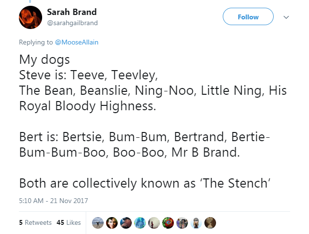 Text - Sarah Brand Follow @sarahgailbrand Replying to @MooseAllain My dogs Steve is: Teeve, Teevley, The Bean, Beanslie, Ning-Noo, Little Ning, His Royal Bloody Highness. Bert is: Bertsie, Bum-Bum, Bertrand, Bertie- Bum-Bum-Boo, Boo-Boo, Mr B Brand. Both are collectively known as The Stench' 5:10 AM - 21 Nov 2017 5 Retweets 45 Likes