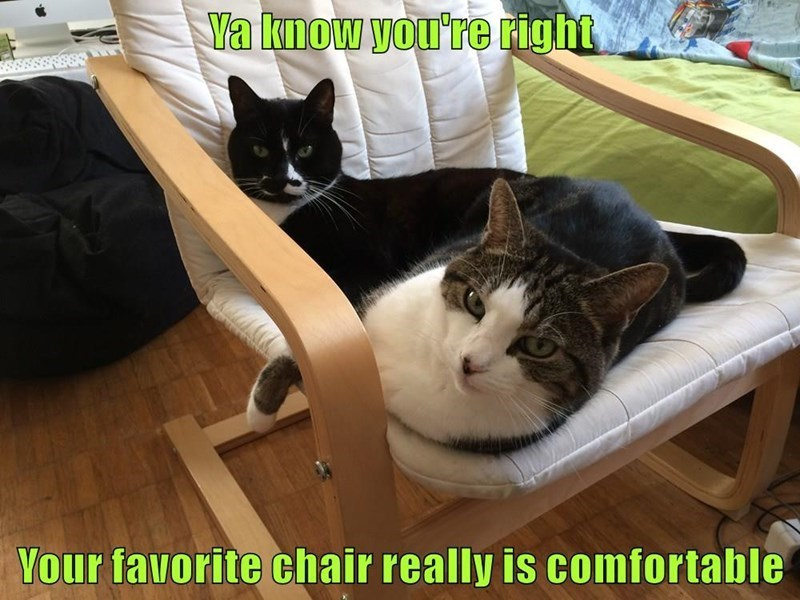Cat - a know you're right Your favorite chair really is comfortable