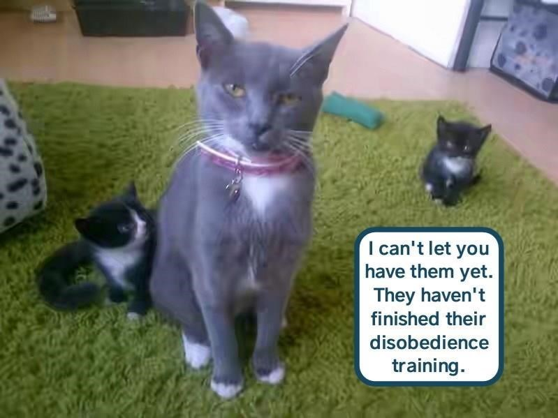 Cat - I can't let you have them yet. They haven't finished their disobedience training