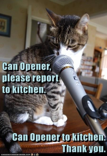 Cat - Can Opener, please report to kitchen Can Opener to kitchen Thank you.