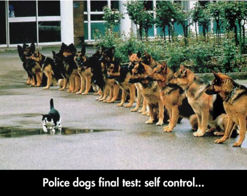 a funny meme of police dogs