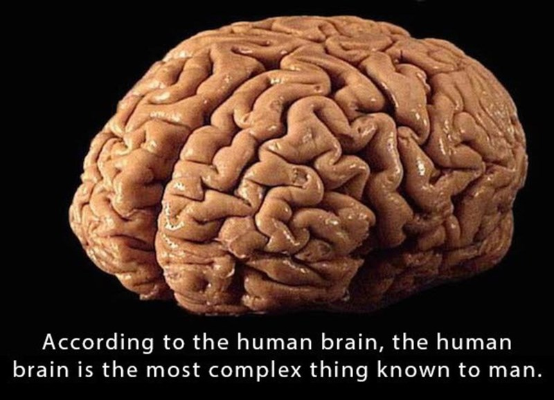 Brain - According to the human brain, the human brain is the most complex thing known to man.