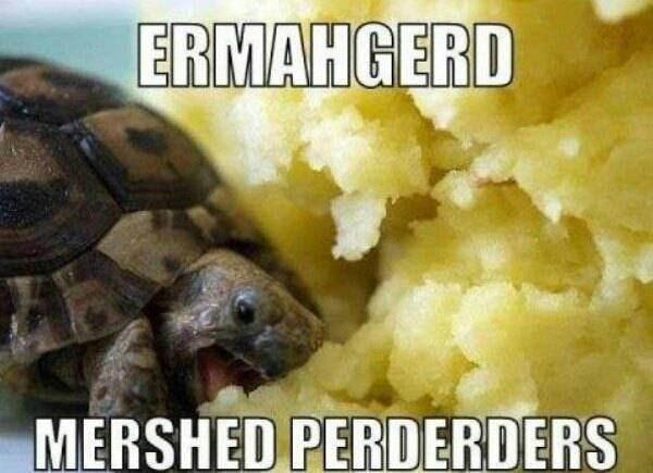 Tortoise - ERMAHGERD MERSHED PERDERDERS
