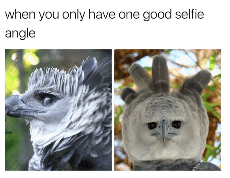 Adaptation - when you only have one good selfie angle aka