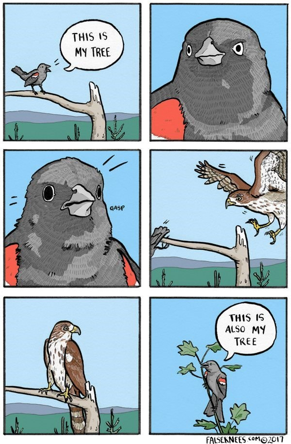 Cartoon - THIS IS MY TREE GASP THIS IS ALSO MY TREE FALSEKNEES COMO2017