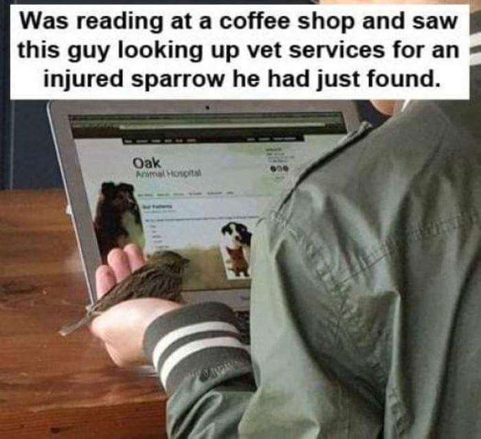 Text - Was reading at a coffee shop and saw this guy looking up vet services for an injured sparrow he had just found. Oak Animal Hospita