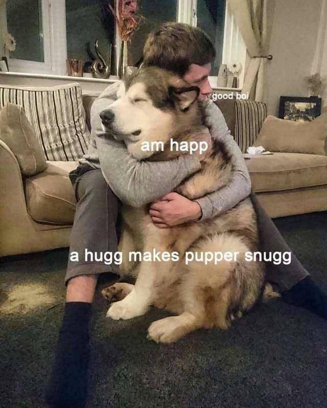 Dog - good boi am happ hugg makes pupper snugg