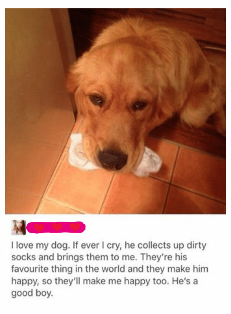 Dog - I love my dog. If ever I cry, he collects up dirty socks and brings them to me. They're his favourite thing in the world and they make him happy, so they'll make me happy too. He's a good boy.