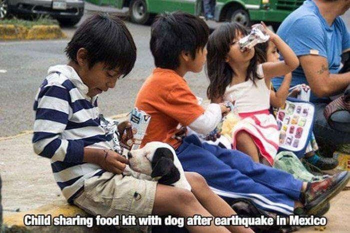 Child - Child sharing food kit with dog after earthquake in Mexico