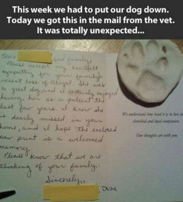 Text - This week we had to put our dog down. Today we got this in the mail from the vet. It was totally unexpected... end famdy flems accept aett Mympecthy to ytmit Necent loss of aligal Aha wav gunt dayand f ertainly njeyed eving her as a fatient th last fu yeans Know she dearly misasdnyo hme, and tl hope thi nclorid print s a elcomed e onderstand boa bard it is to lose se heribed and leyal companion Oar thoughts are with you. eaw me Pleaseknew that wt ars tlin tyour family increly DUM