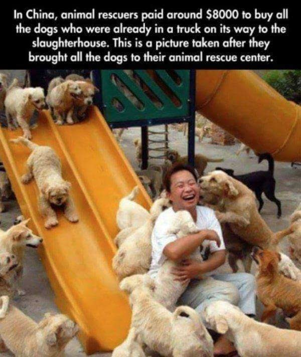 Dog - In China, animal rescuers paid around $8000 to buy all the dogs who were already in a truck on its way to the slaughterhouse. This is a picture taken after they brought all the dogs to their animal rescue center.